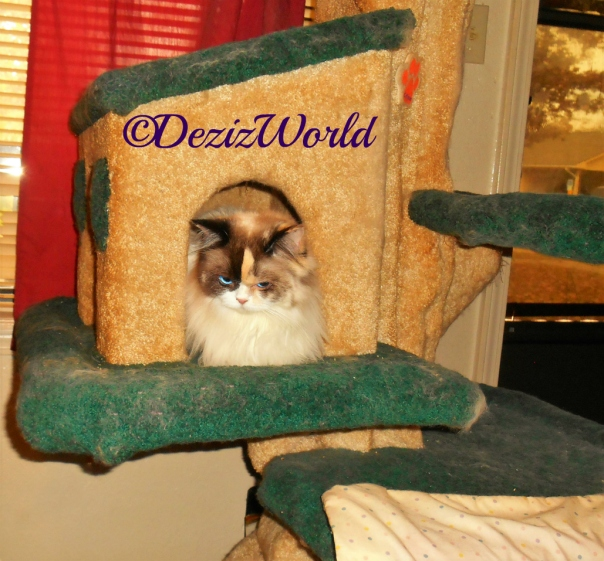 Raena lays in liberty cat tree cubby