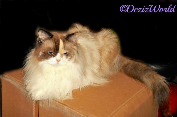 Raena lays on a box