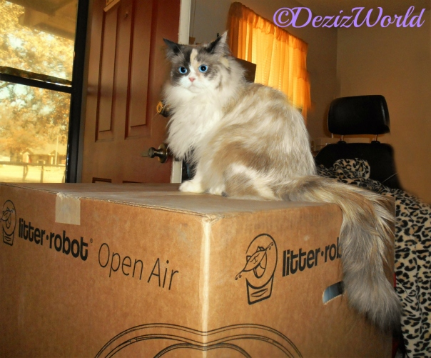 Raena sits pretty and poses on top of the Litter Robot box