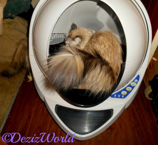 Dezi checks out litter robot from the inside