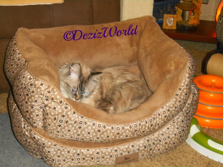Dezi lays in the cat bed
