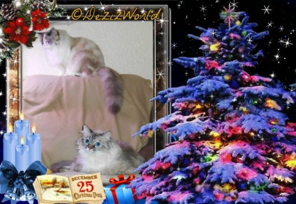 Dezi and Raena sitting on chair in a Christmas frame