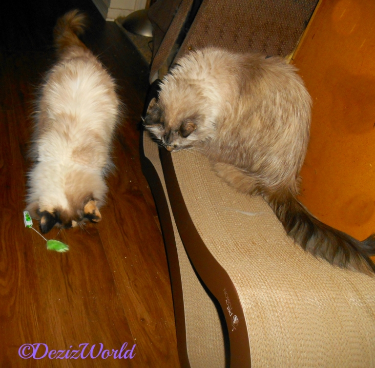 Dezi and Raena play with the hexbug gift from Belinda