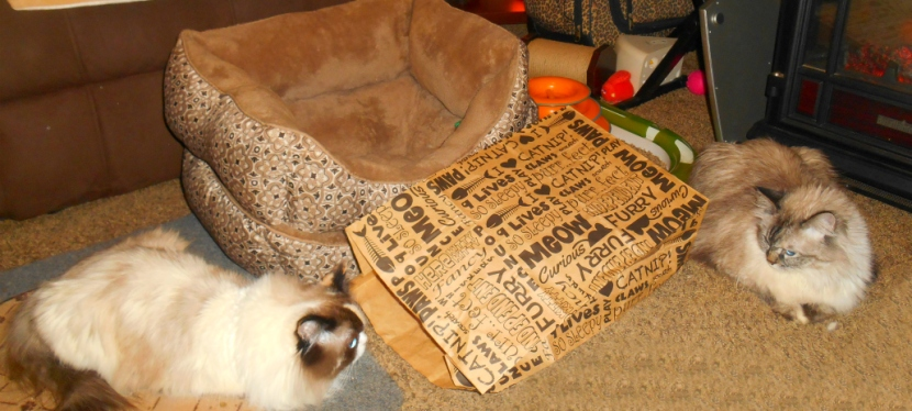 Chatting Cats: Our ChristmasWish