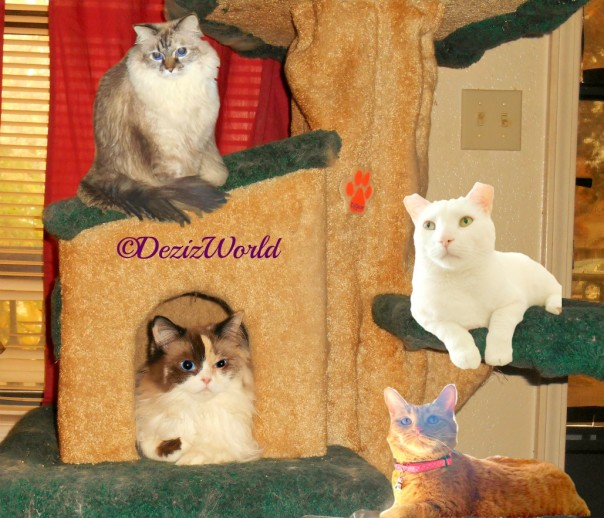Dezi, Raena, Annie and Pierrot lay on the Liberty cat tree
