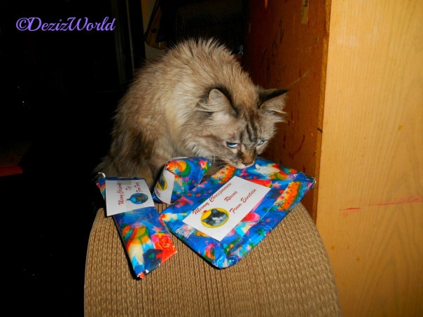 Dezi with gifts from Timmy and Einstein