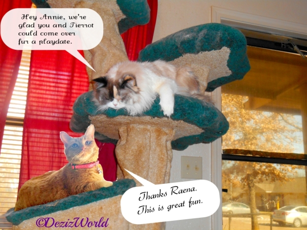 Raena and Annie lay on the Liberty Cat tree