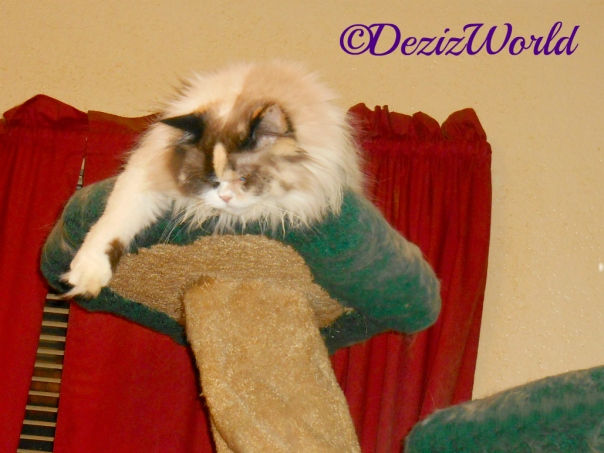 Raena lays hanging over the edge of the top of the liberty cat tree