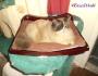 Chatting Cats: Surveying My World & StayingWarm