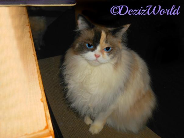 Raena sits pretty on scratcher