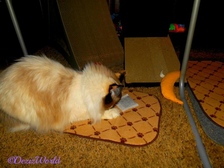 Raena plays with Kit Tea