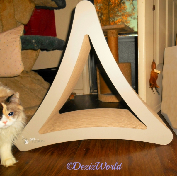 Raena walks past the PetFusionCat Scratcher