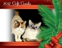 Chatting Cats: Holiday Gift Guide2017