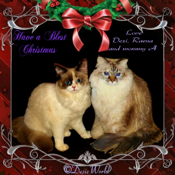 Dezi and Raena in Christmas card frame