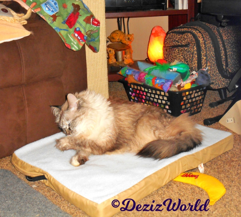 Dezi bathes while laying on the heated mat
