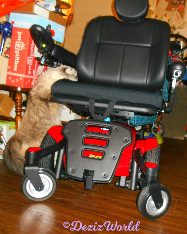 Dezi checks out the new Powerchair