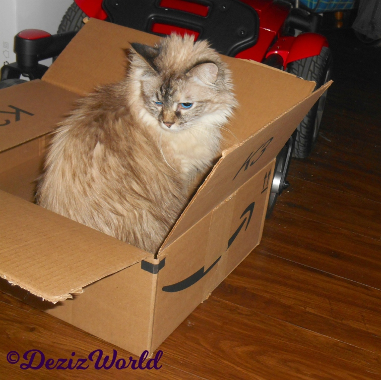 Dezi sits in box looking over her shoulder