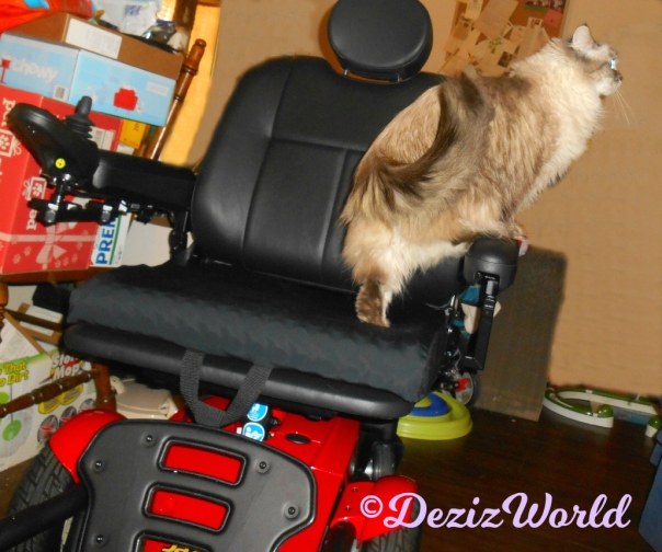 Dezi climbs on the new powerchair