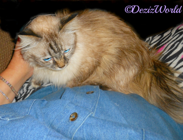 Dezi lays in mommy's lap and gets loving
