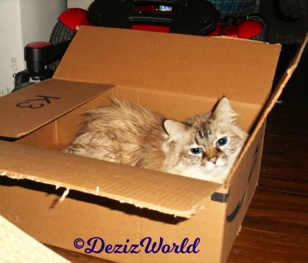 Dezi lays in box
