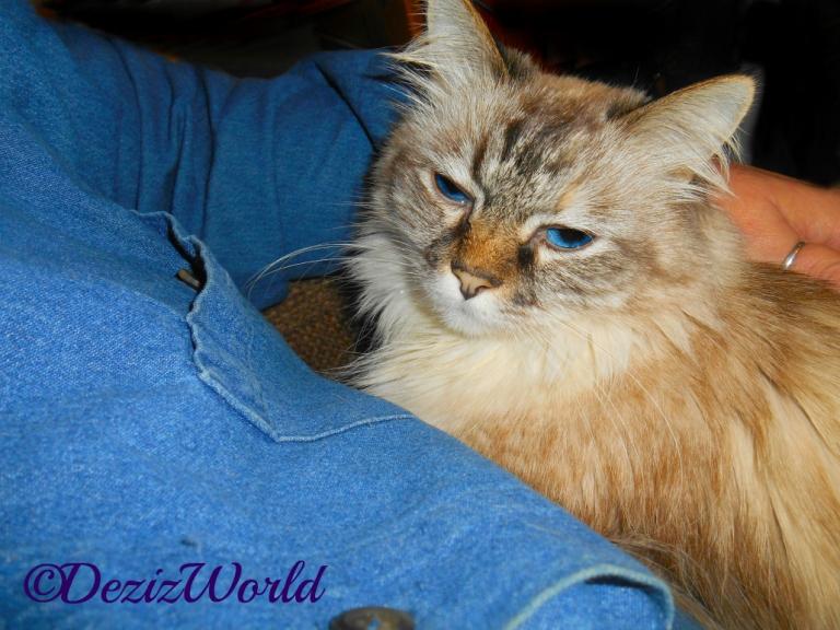 Dezi lays in mommy's lap