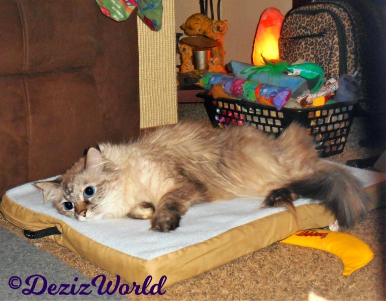 Dezi lays on heated cat mat