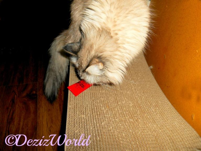 Dezi checks out the Lucas' PawPw Ointment