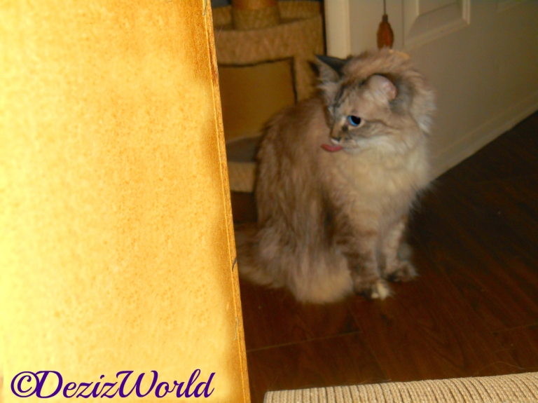 Dezi sits with tongue out in front of door