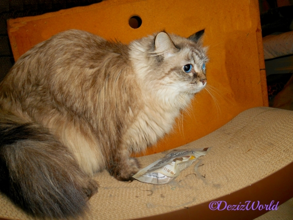 Dezi with treats from Pipo on cat scratcher