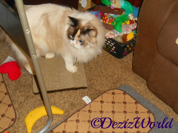 Raena on scratcher at toy box