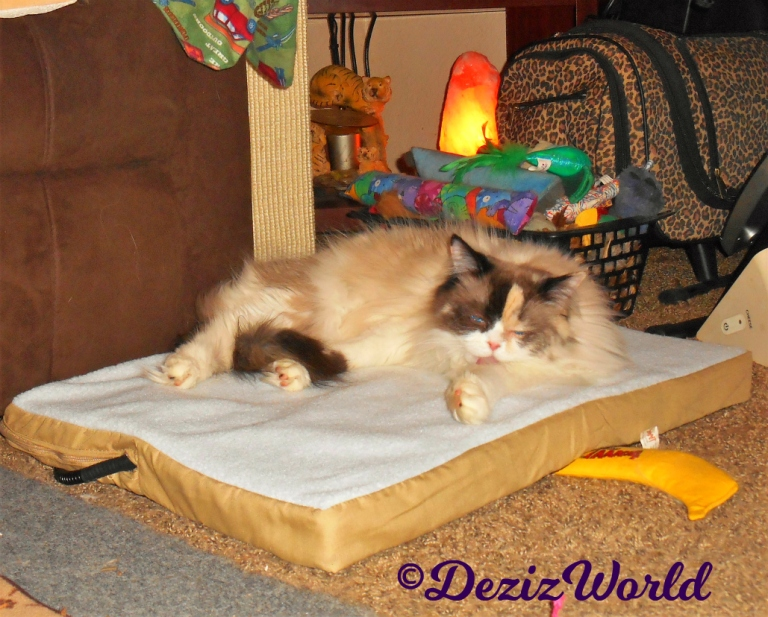 Raena bathes while laying on the heated mat