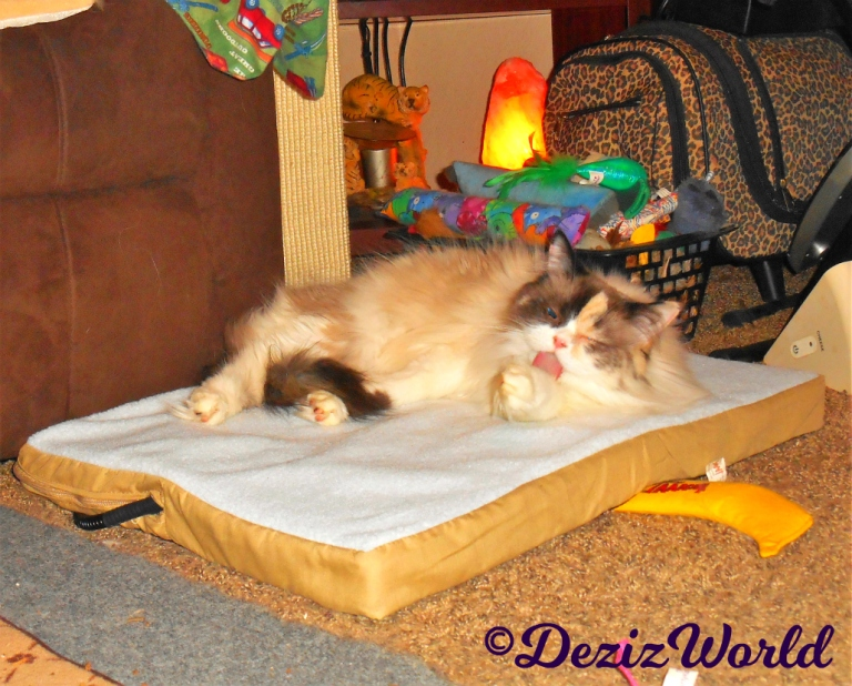 Raena bathes while laying on cat mat