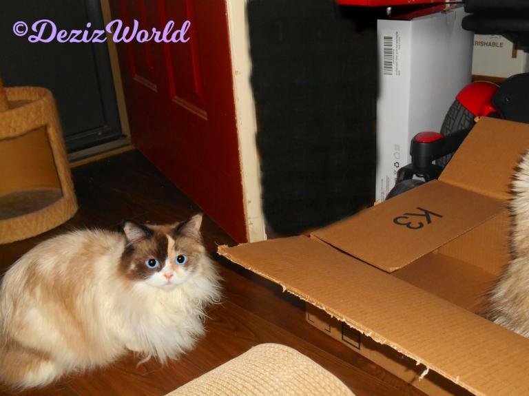 Raena lays beside box