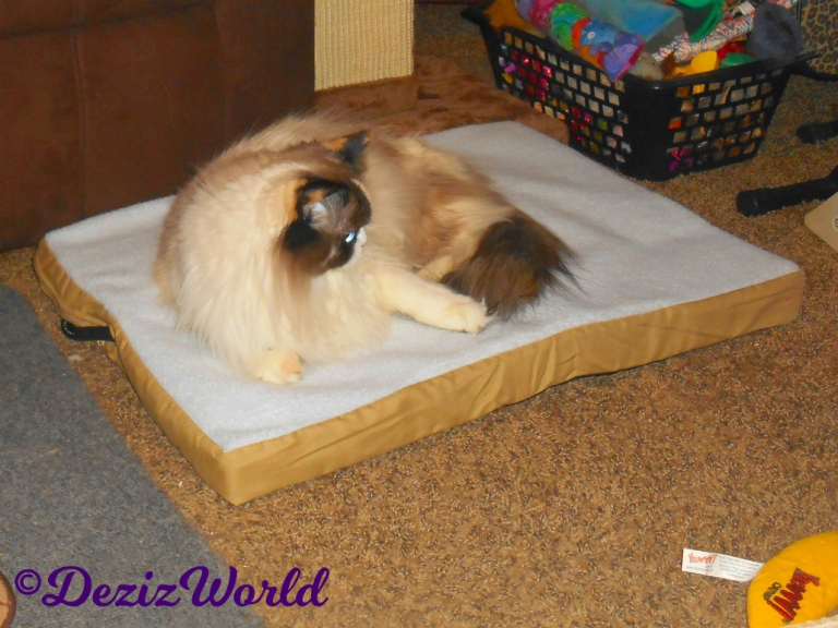 Raena lays on the Heated Pet Mat from Art of Paws