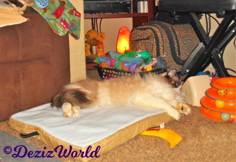 Raena lays on heated cat mat