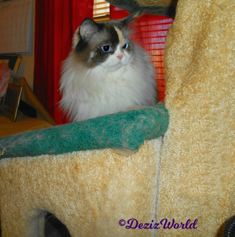 Raena lays on Liberty cat tree house