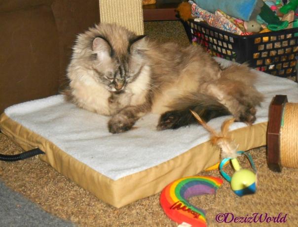 Dezi licks paw while laying on heated cat mat