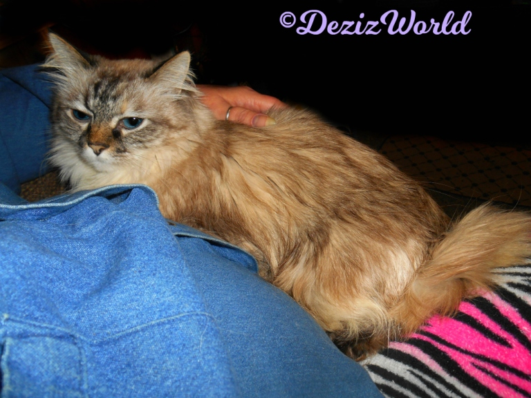 Dezi gets loving while laying on mommy's lap