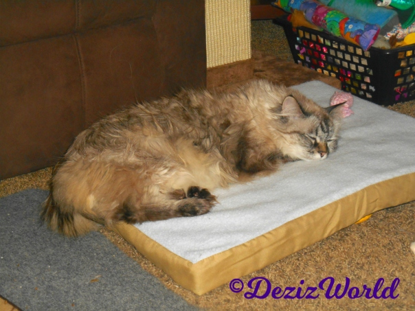 Dezi sleeps on heated cat mat