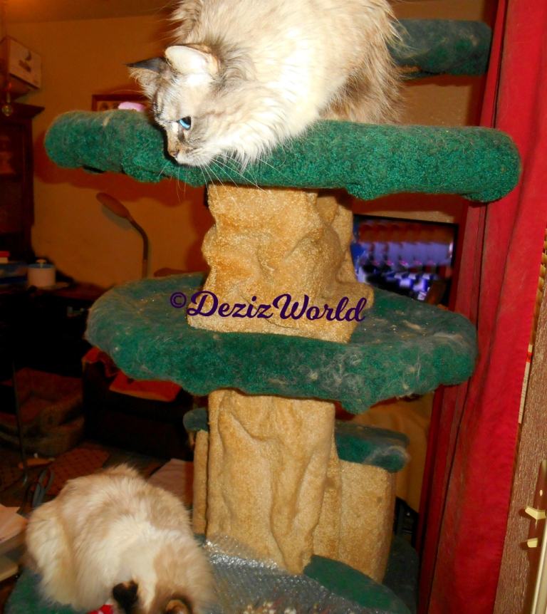Dezi hangs over the edge of the liberty tree and looks down at Raena