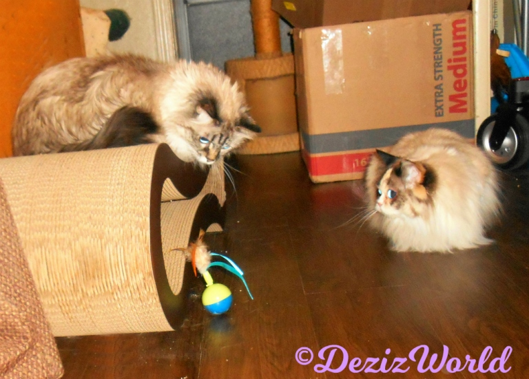 Dezi and Raena watch new spinner toy from Cindy