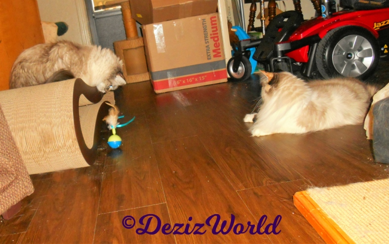 Dezi and Raena watch the new spinner toy from Cindy