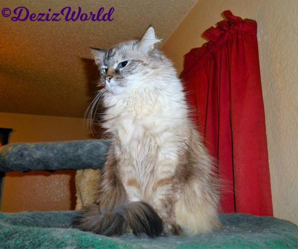 Dezi sits pretty atop the liberty cat tree