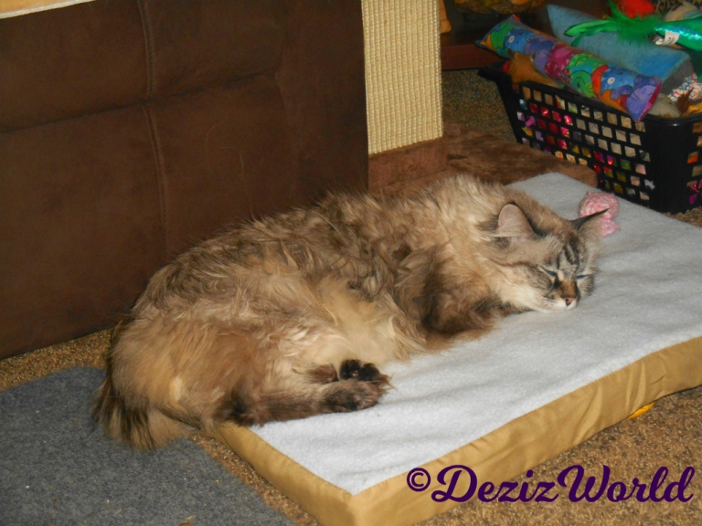 Dezi lays sleeping on the heated cat mat
