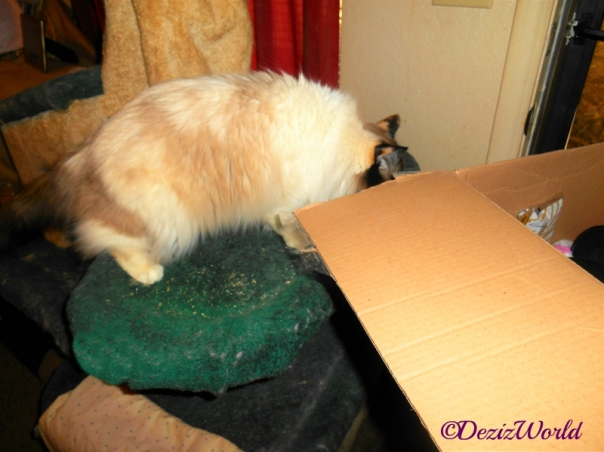 Raena checks out gift box from Cindy