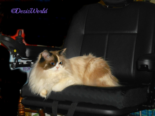 Raena lays in new powrchair