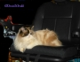 Service Cats: Q & A About The New PowerChair