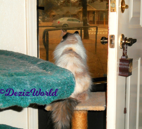 Raena sits on small perch and looks out the door