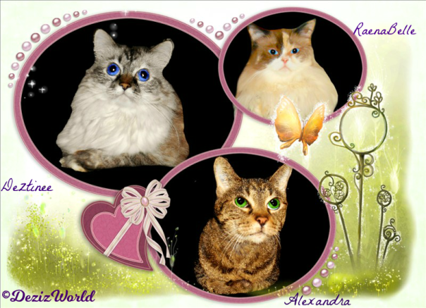 Dezi, Raena and Lexi in a pink circled frame with a heart