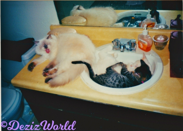 Devon lays on vanity and yawns while Lexi and Lucky sleep in the sink